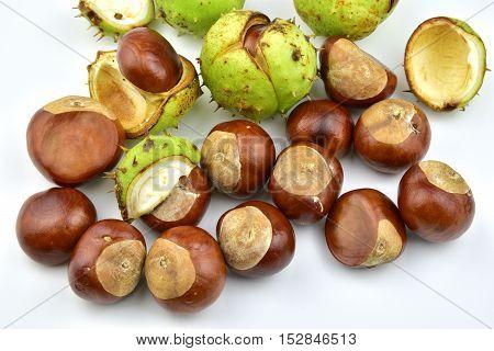 Chesnut burr split open showing a fresh conker.