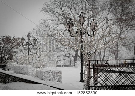 Winter park in snow. Trees with lights