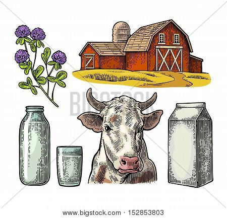 Set Milk farm. Cow head clover box carton package glass and bottle. Vector engraving vintage color illustration. Isolated on white background.