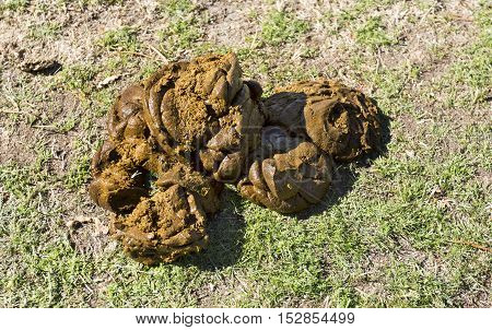 Cow dung also known as cow pats cow pies or cow manure is the waste product of bovine animal species.