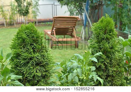 Wooden easy chair on a garden lawn in a house back yard shot through garden plants