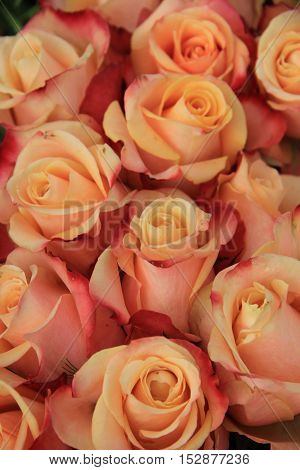 Multicolored vintage look wedding roses in pink yellow and orange