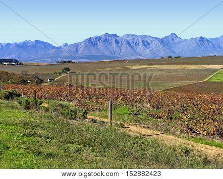 Farm Stellenbosch, Cape Town South Africa 12acc