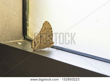 butterfly stay at window in house - can use to display or montage on product
