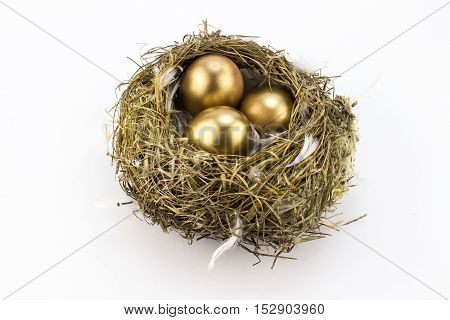 Three gold eggs in feathered bird's nest isolated on white background