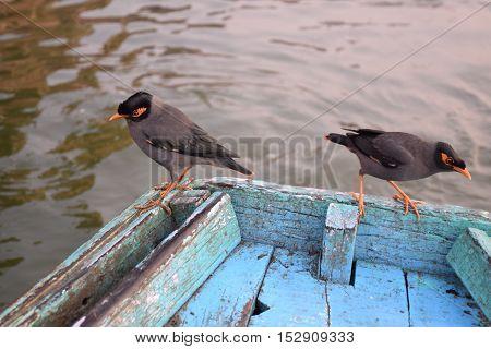 Two birds on a boat on river Ganga, Varanasi, Uttar Pradesh, India