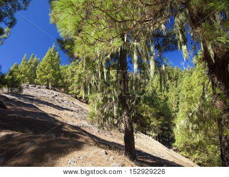 Gran Canaria, Hiking Path Cruz De Tejeda - Teror