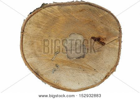 Cut transverse tree birch on white background