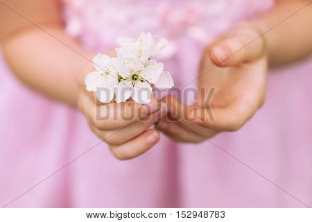 Hands of the girl and spring flower close up. Spring background. The child's hands holding a spring flower. White spring flower. The girl in a pink dress.