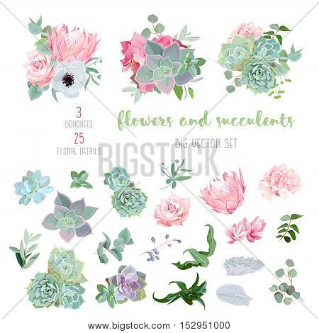 Succulents protea rose anemone echeveria hydrangea decorative plants big vector collection. All elements are isolated and editable.