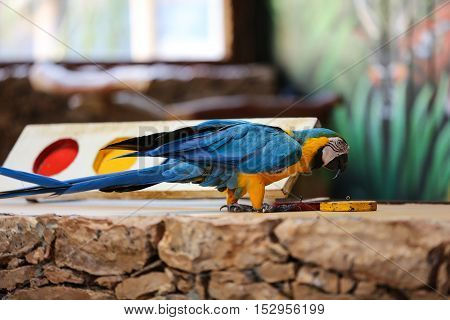 Circus shows of parrots on Fuerteventura Canary Island Spain