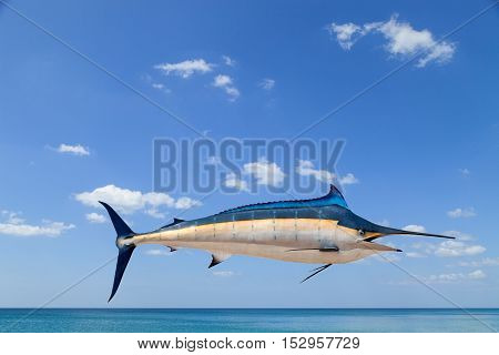 Marlin - Swordfish Sailfish saltwater fish (Istiophorus) isolated on sea and sky background