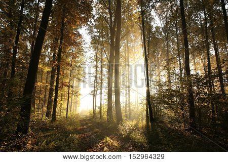 Autumn deciduous forest lit by morning sun.