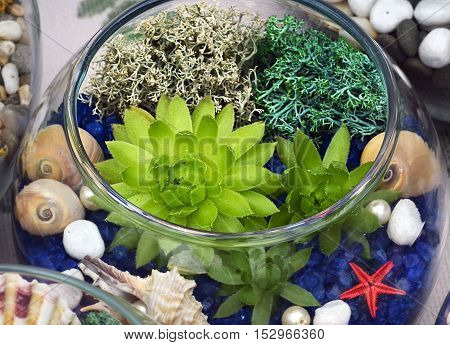 Decorative glass vase with succulent plants and seashells.Glass interior terrarium with succulents.Miniature garden in glass with succulents.
