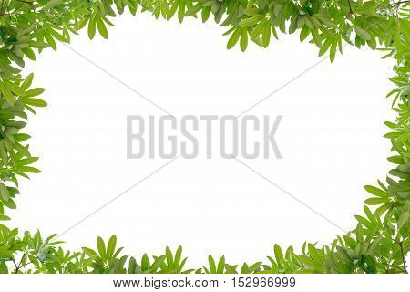 Beautiful Green leaves frame on white background