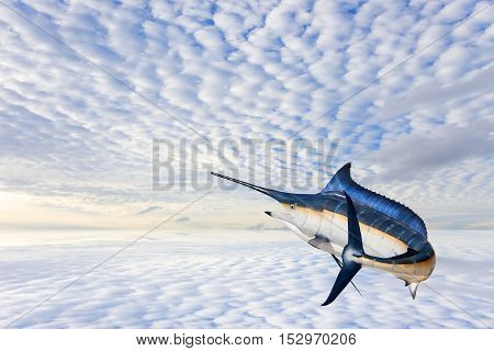 Marlin - SwordfishSailfish saltwater fish (Istiophorus) isolated on sky background with water reflex
