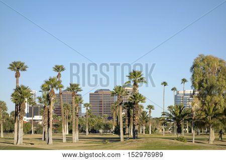 View at Phoenix Downtown through tall palms of Encanto Park Arizona; Copy space in clear blue sky