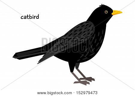 Black Catbird with yellow beak vector illustration