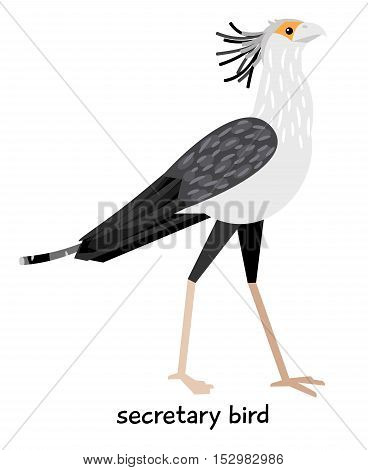 Leggy beautiful  Secretary bird tufted vector illustration