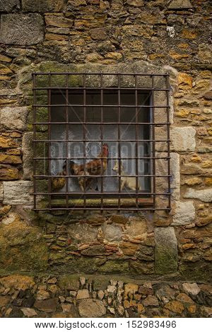 Old window with a railing and taxidermy animal in antique village `Peratallada, Catalonia, Spain