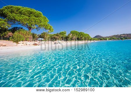 Sandy Beach With Pine Trees And Azure Clear Water, Corsica, France, Europe.
