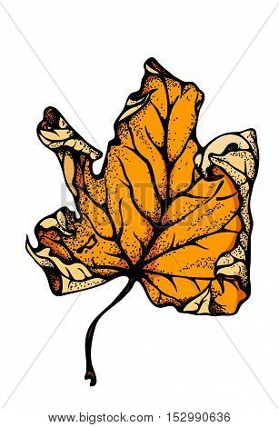 Realistic Colorful Autumn maple leaf vector illustration