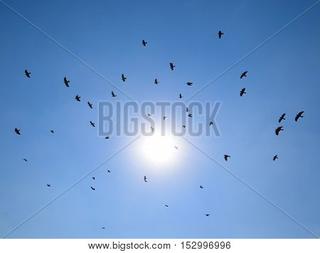 Silhouette Of A Flock Of Blackbird Flying Through A Surreal Evening Sky With A Fiery Sun