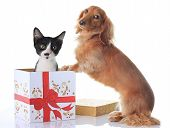 Puppy and kitten and the Christmas present. poster