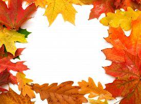 Autumn card of maple leaves. Flat. Leaf.