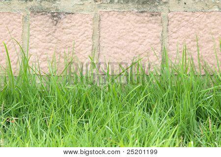 Green Grass On A Brick Wall