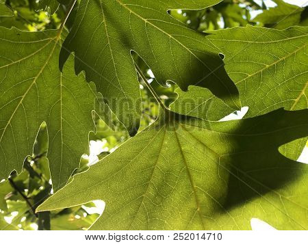 Detail Of Plant Leaves