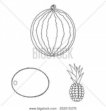 Different Fruits Outline Icons In Set Collection For Design. Fruits And Vitamins Vector Symbol Stock