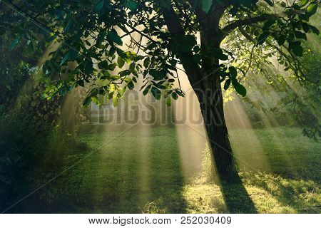 Sun Rays Nature Magic. Sun Rays Nature Effect Through Tree Leaves. Magical Nature In Back Yard. Sun