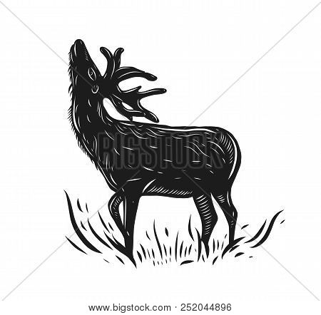Deer Hand Drawn Vector Illustration Isolated On White Background.