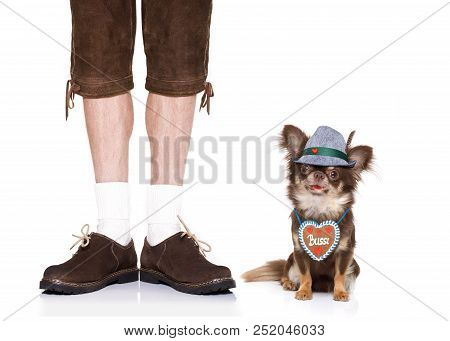 Bavarian Chihuahua Dog With Owner  Isolated On White Background , Ready For The Beer Celebration Fes