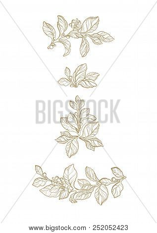 Floral Vector Set Of Mate Branch, Flower, Berry. Botanical Art Line Texture, Pattern Realistic Print