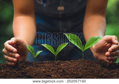 Young Tree Tree Planting Tree Care Watering A Tree In Nature,growing Trees Three