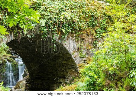 Green Brigde Forest Waterfall Ireland Plants Idyllic