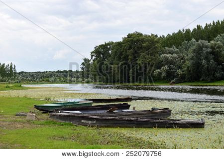 Nature Reserve Landscape. Several boats on the Riverside in Nature Reserve. Green trees. Yellow water lily, lotos. poster