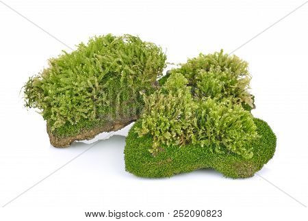 Moss, Green Moss  Isolated On  White Background