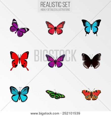 Set Of Beauty Realistic Symbols With Papilio Ulysses, Birdwing, Precis Almana And Other Icons For Yo