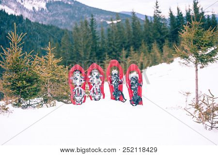 Snowshoes Standing In The Snow Against The Background Of Snow And Mountains. Winter Walks With Fores
