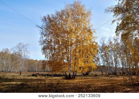 Autumn In Siberian Forest, Omsk Region, Russia