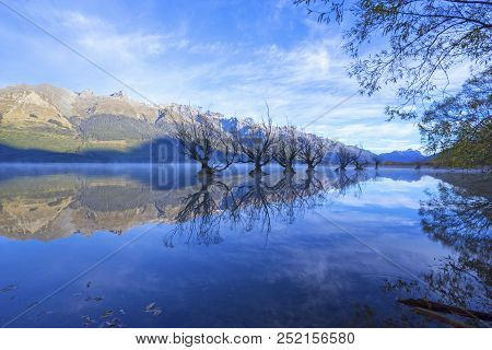Row Of Willow Trees On Lake Wakatipu In Glenorchy, New Zealand.