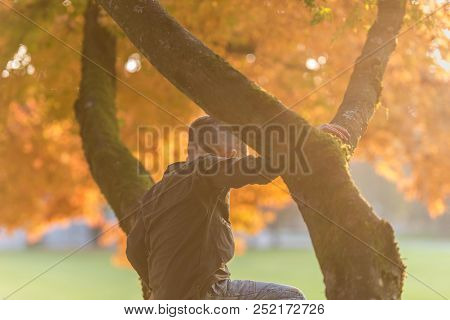 Young Boy Climbing An Autumn Tree Outdoors In A Park With Bright Evening Sunflare.