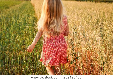 Girl With Curly Long Hair Walking On The Field With Oats At Sunset. Summer. Vintage.