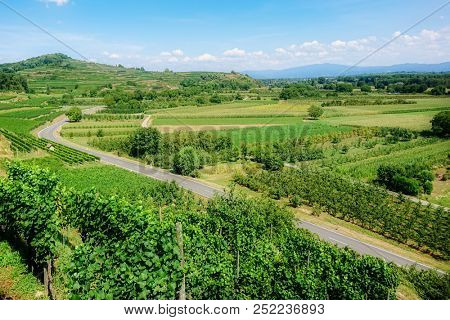 An image of a vineyard scenery at Ihringen Kaiserstuhl Germany