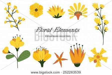 Floral Elements Collection With Different Species. Vector Illustration.