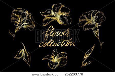 A Set Of Engraved Hand Drawings In Old Or Antique Style, Vintage Blossoms With Calligraphic Elements