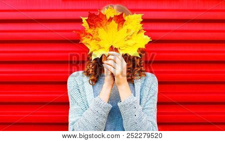 Funny Girl Hides Her Face Yellow Maple Leaves On A Red Background
